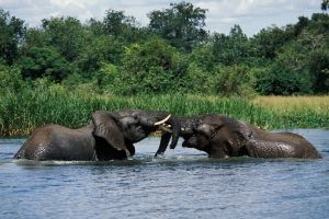 MURCHISON FALLS -3 DAYS - Group Price $340pp